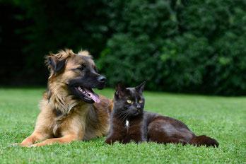 Rasenpflege und Haustiere - was muss man beachten?