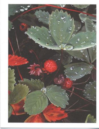 """""""Strawberry Fields, Too"""""""