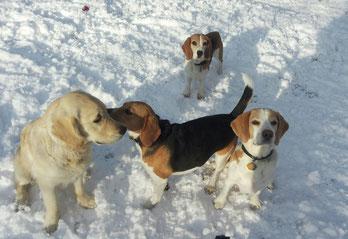 Sunny und Lucy mit ihren vierbeinigen Freunden Charly und Molly
