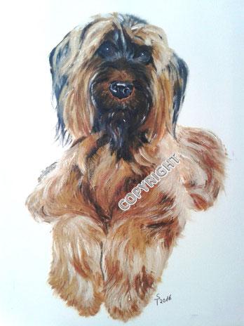 Hundeporträt, Acryl auf Leinwand, 50x70 cm, Fotovorlage: © cynoclub, Fotalia.  Rauhaardackel liegend. Hund schaut den Betrachter an. Sichtbar graubrauner Kopf mit blonder Schnauze sowie Vorderpfoten, linke Hinterpfote und Rute.