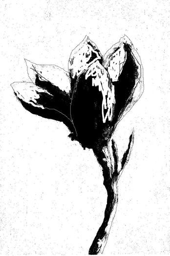 10-Minuten-Malerei: Magnolienblüte