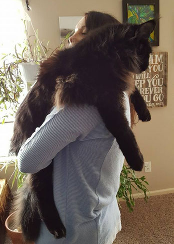 EuroCoons Maine Coon cats big cat hug