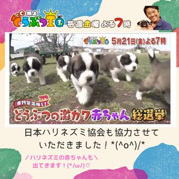 坂上どうぶつ王国 5/21(金)19時スタート!