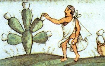 el nopal y su uso en cremas y productos de belleza natural