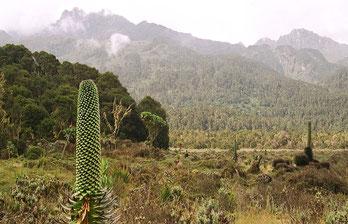 Grande Fossa Tettonica - Tipico panorama della Rift Valley.