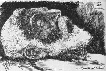 Как умер Антонио Гауди - подлинная история