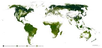 Les forêts de la planète pour la captage co2.