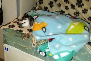 Barny ist müde und macht ein Nickerchen
