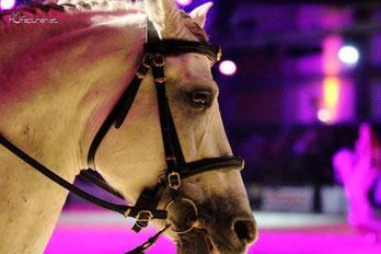 Nacht der Pferde auf der Messe Pferd Wels, Pferdefotografie Hufspuren