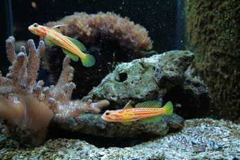 Fischfutter in Rath/Anhoven