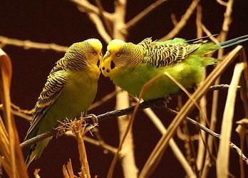Vogelfutter und Vogelzubehör in Rath/Anhoven