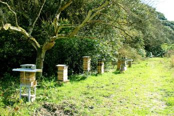 ニホンミツバチの飼育場