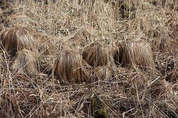 写真:  NPO法人霧多布湿原ナショナルトラスト(フェイスブック  )