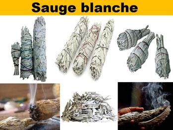 Sauge blanche  - Boutique d'encens naturel - Casa bien-être.fr