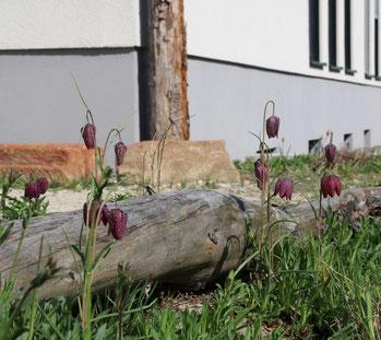 Naturnahe Außenanlagen von Gewerbeflächen