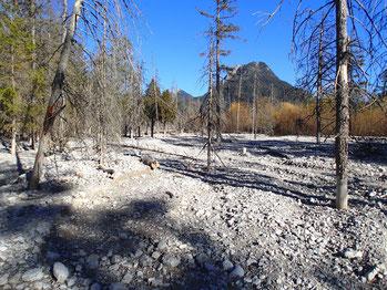 Vergänglichkeit im alpinen Schotterfeld, Wildniswandern mit Wildnisgeist