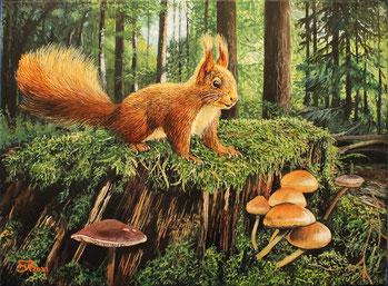 Eichhörnchen (2) 30 x 40 Preis 135 €