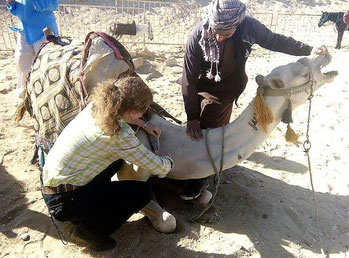 Dr. Dooher volunteering to give a camel a free de-worming injection in Egypt