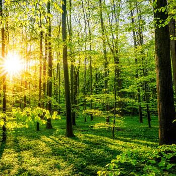 Wald am Morgen mit Sonnenlicht