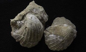 index fossiles absolu datant rencontres en ligne déprimant