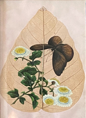 Late 19th century Chinese Export skeleton leaf from a Sacred Fig Tree, with hand painted flowers and butterfly.