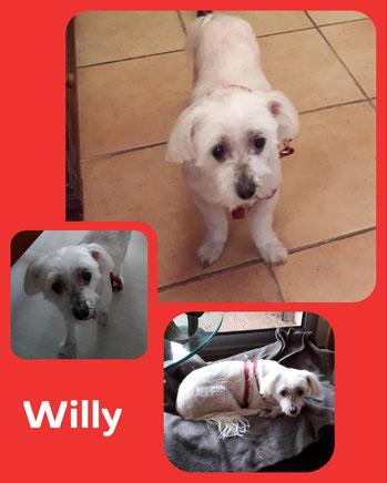 Willy adopté en Décembre 2018