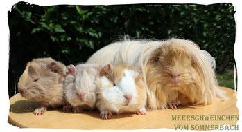 Ginger mit unserem R-Wurf Rusty, Ramses und Rhabarber