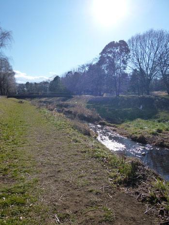 野川沿いの風景〜とらぬ狸の散歩