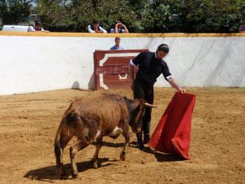 toreando una vaquilla en Córdoba