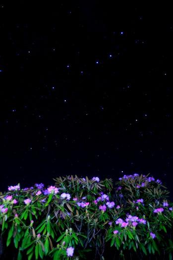 石楠花と北斗七星