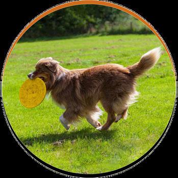 Hund bringt Frisbee zurück
