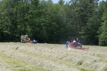 Haying the fields in 2011