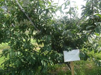 Schild bei Baumleasing
