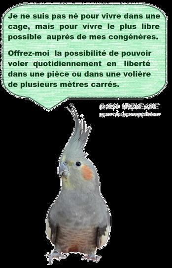 Le perroquet n'est pas né pour vivre dans une cage, mais pour vivre le plus libre possible auprès de ses congénères.
