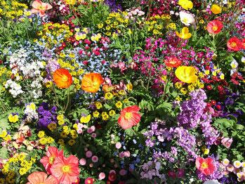 Wildes Blumenbeet - Glück zurück