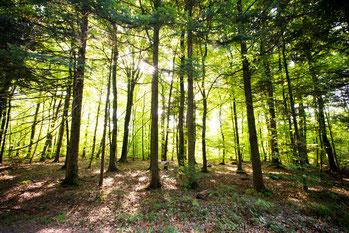 La belle forêt d'Argonne - Photo Guillaume Ramon