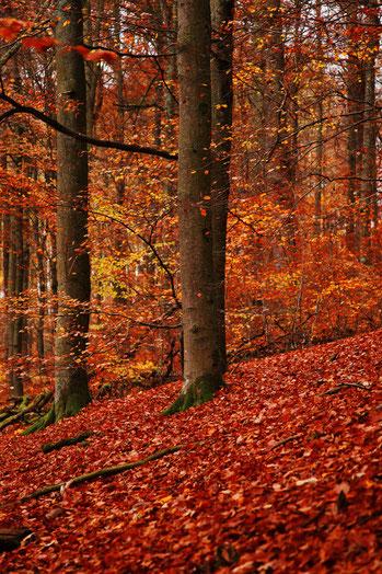 Herfstkleuren in het Sauerland