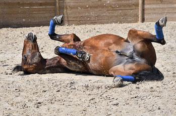 Bauchnabel Pferd - Störungen im Energiefluss lösen
