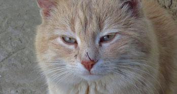 Energetische Narbenentstörung bei Katzen