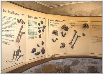 Museo Koobi Fora - Lago Turkana