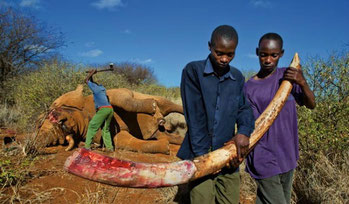 Bracconaggio in Kenya