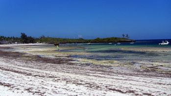 Costa del Kenya - Bassa Marea - Watamu