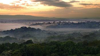 Riserva Nazionale Foresta Kakamega