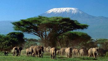 Vista del Kilimanjaro, Kenya