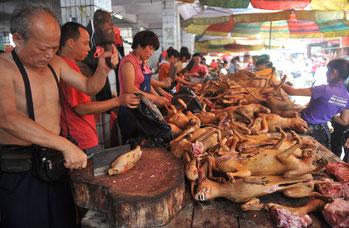 Ogni anno 25 milioni di cani vengono uccisi e mangiati dagli umani.