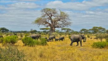 Elefanti nella savana africana