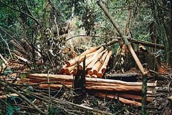 Nuovi coloni cancellano la foresta