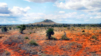 Kenya Vacanze - Parco Nazionale Tsavo.