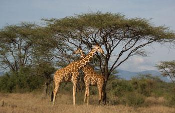 Riserva Samburu