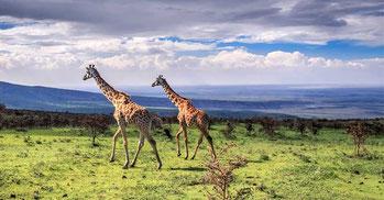 Riserva Naturale Ngorongoro (Tanzania)